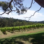 Polperro winery